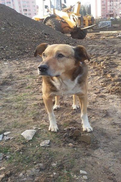 В Гродно на месте одного из снесенных домов на Татарской пес ждет своих хозяев уже больше месяца (фото) - фото 2