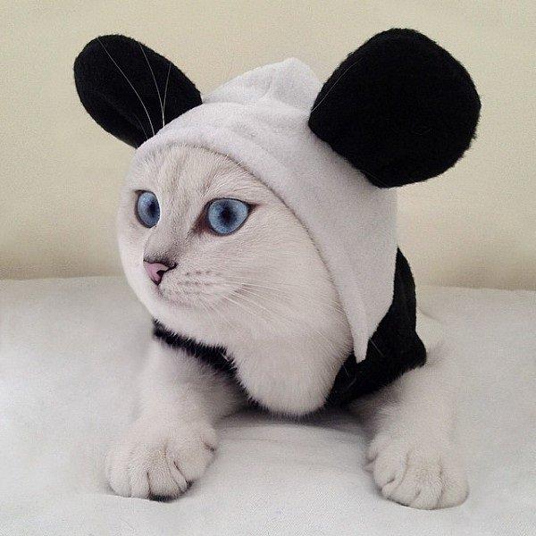 Кот з блакитними очима підкорює Мережу (ФОТО) (фото) - фото 1