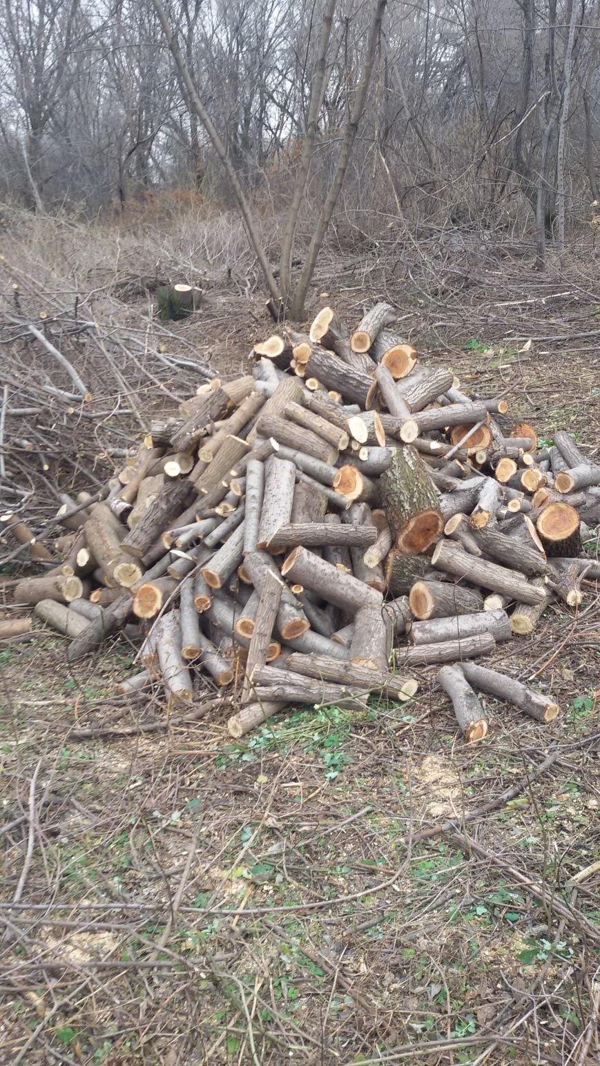 В Днепродзержинске задержана группа дровосеков, фото-2
