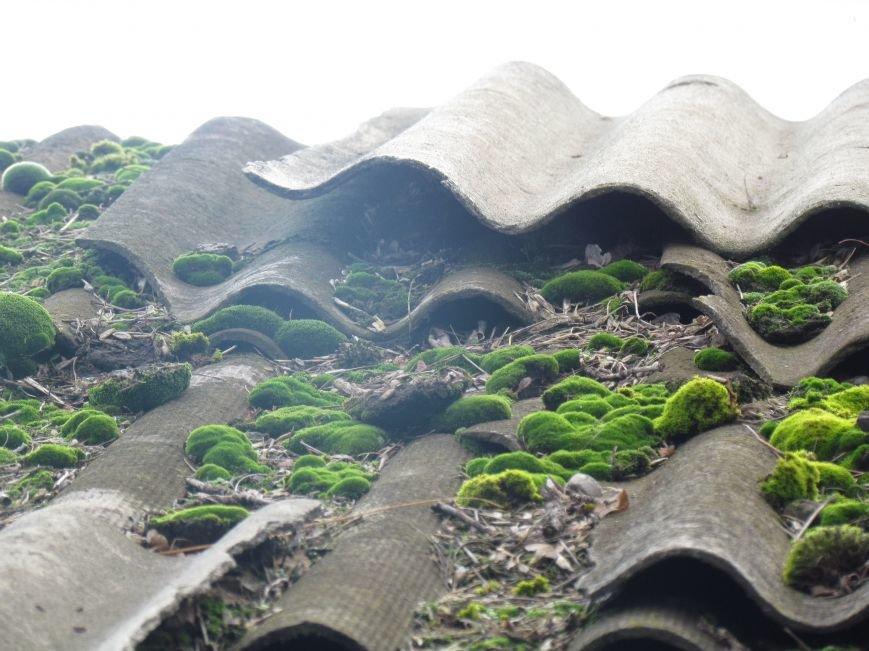 Фотопятница: «Растения. Выжить любой ценой», фото-6
