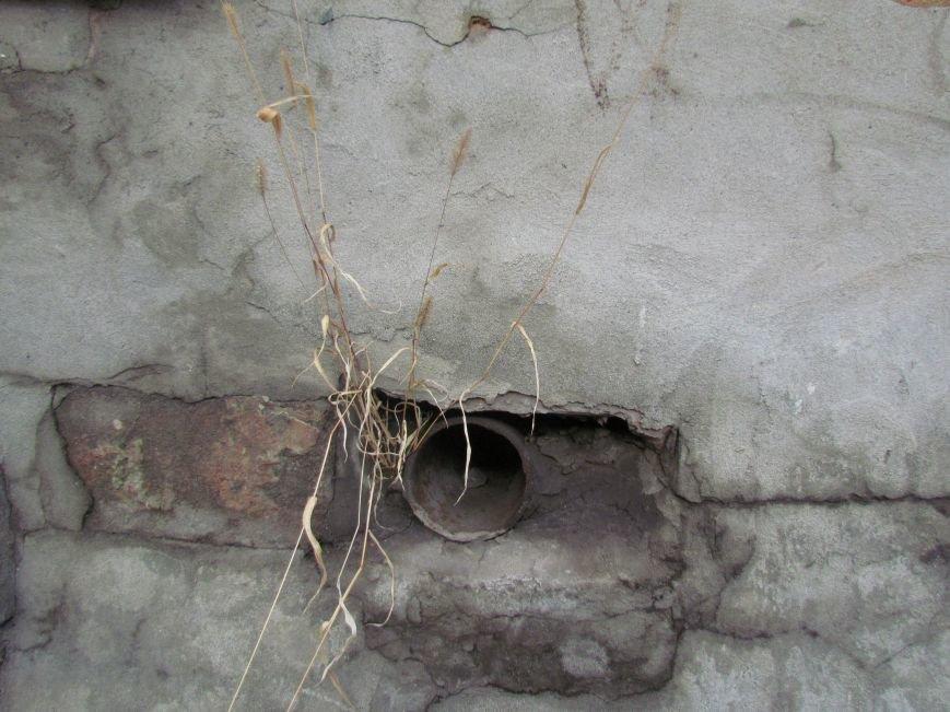 Фотопятница: «Растения. Выжить любой ценой», фото-5