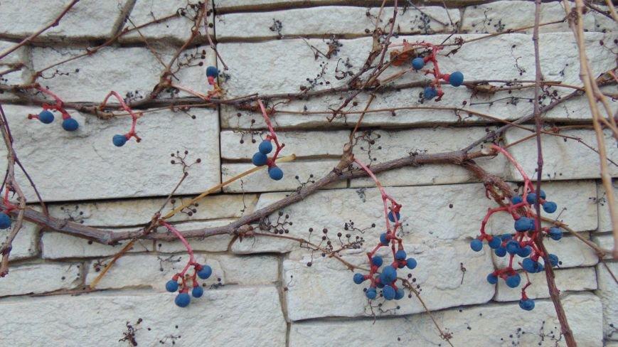 Фотопятница: «Растения. Выжить любой ценой» (фото) - фото 1