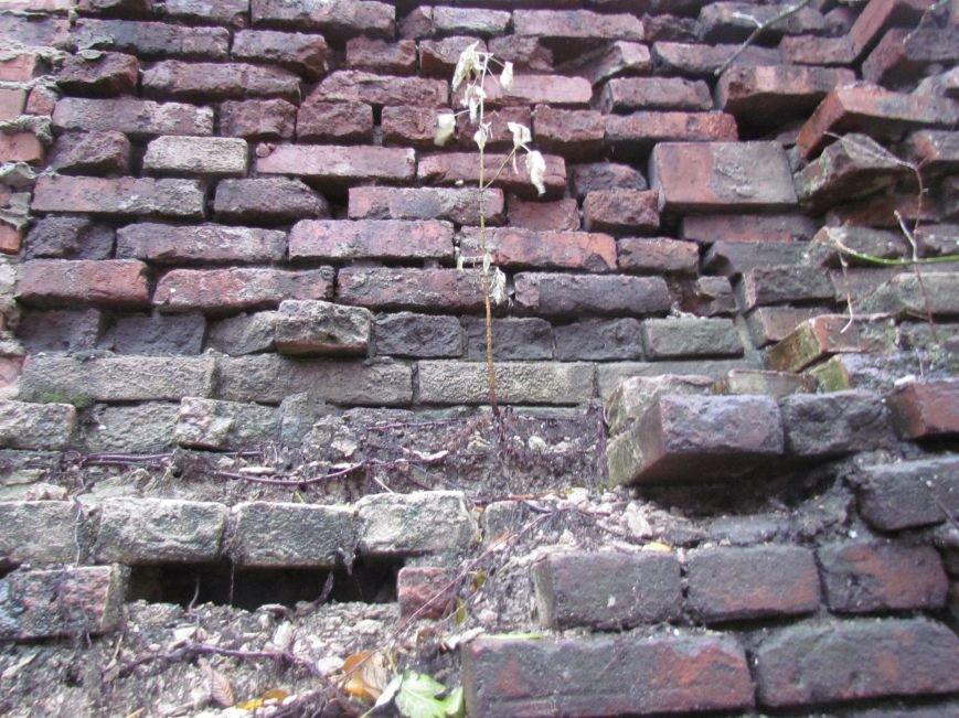 Фотопятница: «Растения. Выжить любой ценой», фото-21