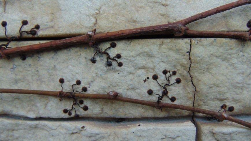 Фотопятница: «Растения. Выжить любой ценой» (фото) - фото 3