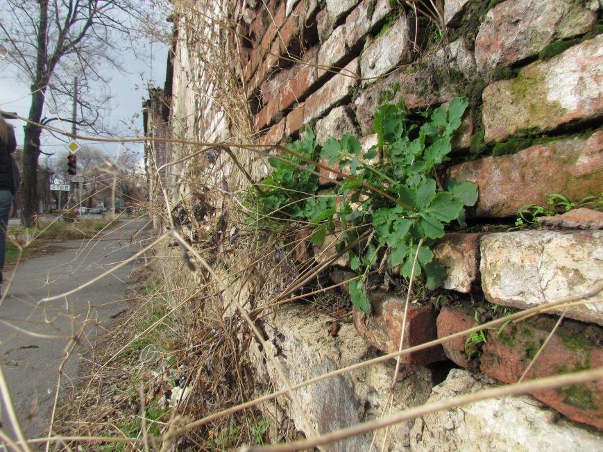 Фотопятница: «Растения. Выжить любой ценой», фото-3