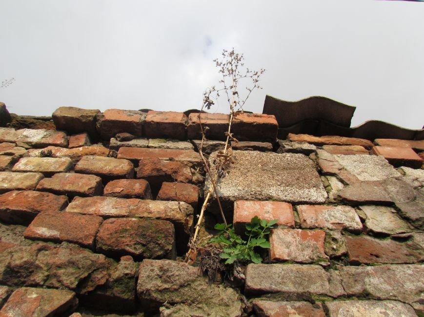 Фотопятница: «Растения. Выжить любой ценой», фото-4