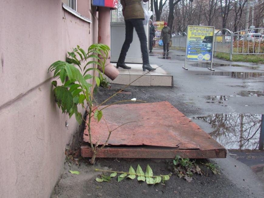 Фотопятница: «Растения. Выжить любой ценой», фото-25