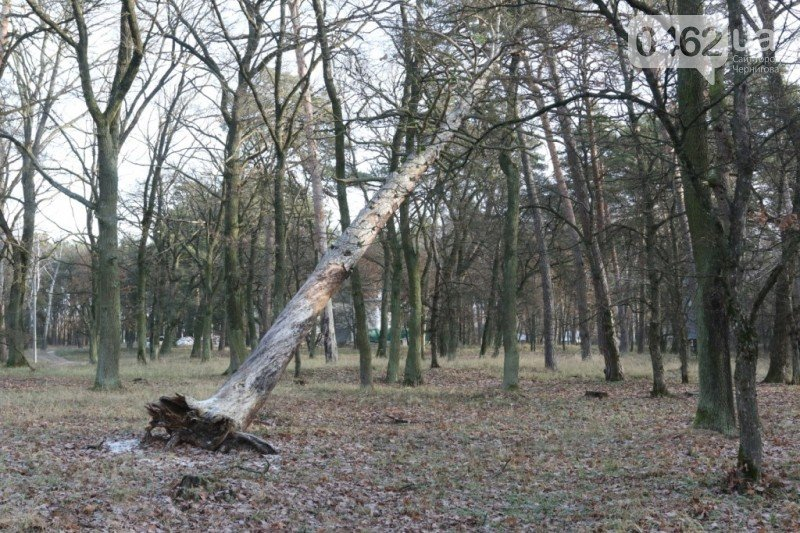 В урочище «Святое» массово уничтожают деревья, фото-4