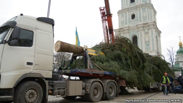 В Киев привезли главную елку страны (ФОТО) (фото) - фото 1