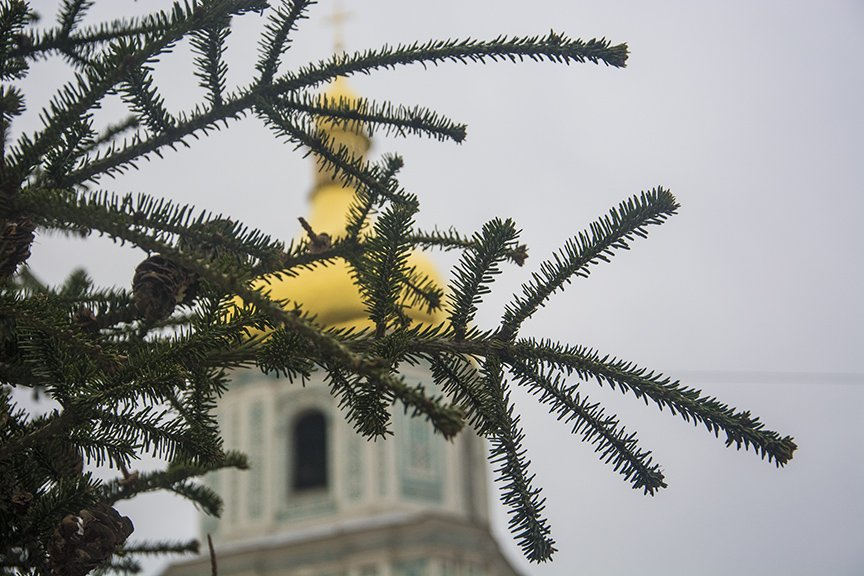 В Киеве установили главную елку страны (ФОТОРЕПОРТАЖ) (фото) - фото 2