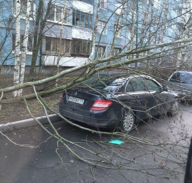 В городе Пушкине штормовой ветер скинул дерево на проезжающий автобус, фото-1