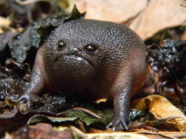 Недовольная лягушка и другие (фото) - фото 1