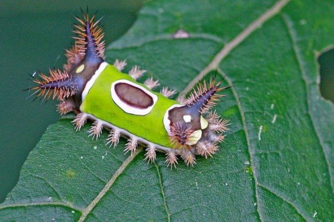 Недовольная лягушка и другие (фото) - фото 14