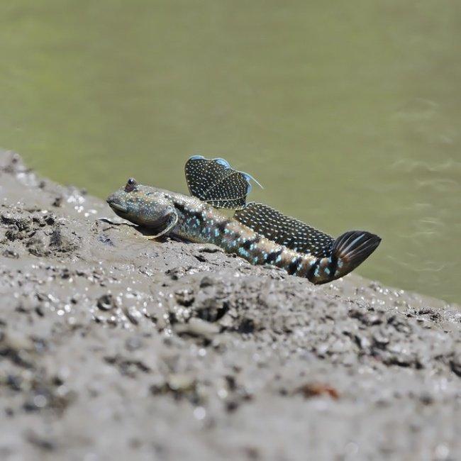 Недовольная лягушка и другие (фото) - фото 7