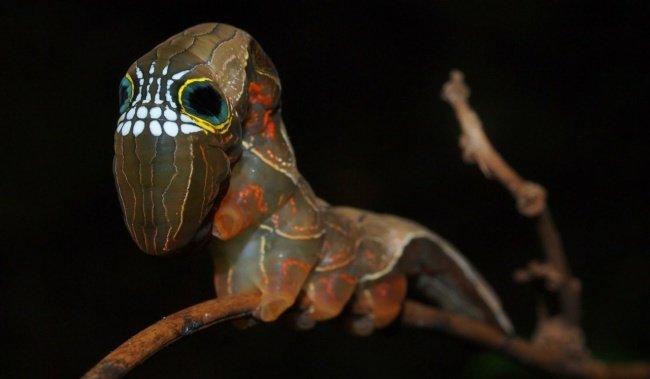 Недовольная лягушка и другие (фото) - фото 6