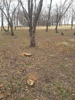 Дрова вместо газа! В Мариуполе практические уничтожили дубовую и кленовую рощи в поселке Азовкольцо (Фотофакт), фото-3