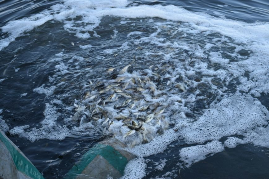 Десятки тысяч мальков запустили в реки Николаева (ФОТО) (фото) - фото 2