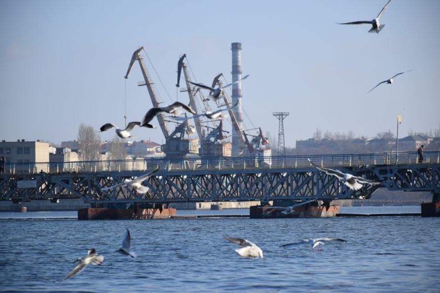 Десятки тысяч мальков запустили в реки Николаева (ФОТО) (фото) - фото 5