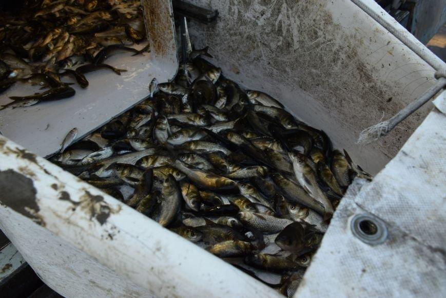 Десятки тысяч мальков запустили в реки Николаева (ФОТО) (фото) - фото 4