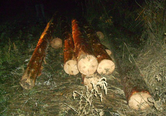 На Полтавщині чоловік загинув від спиляних ним дерев (фото) - фото 2