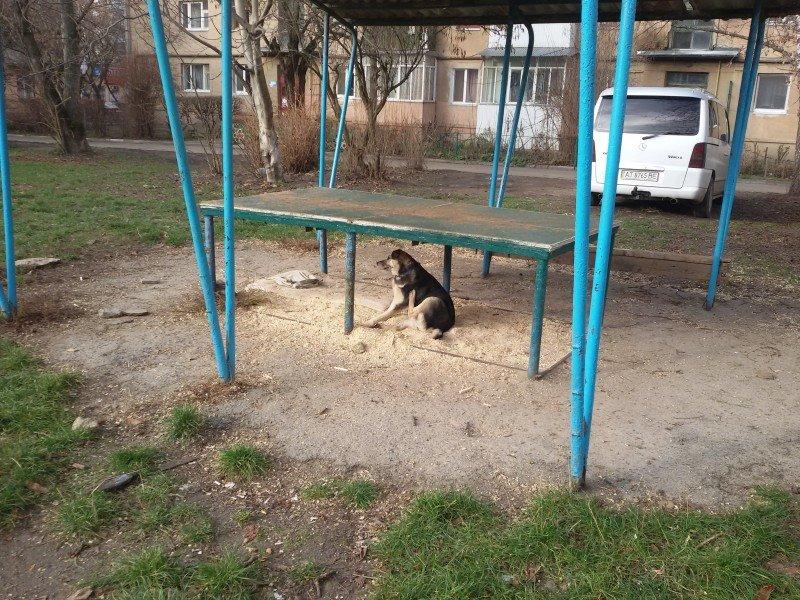 """Франківчанка, викликала """"ЄРЦ"""", щоб забрати собачу будку з двору (ФОТО), фото-3"""