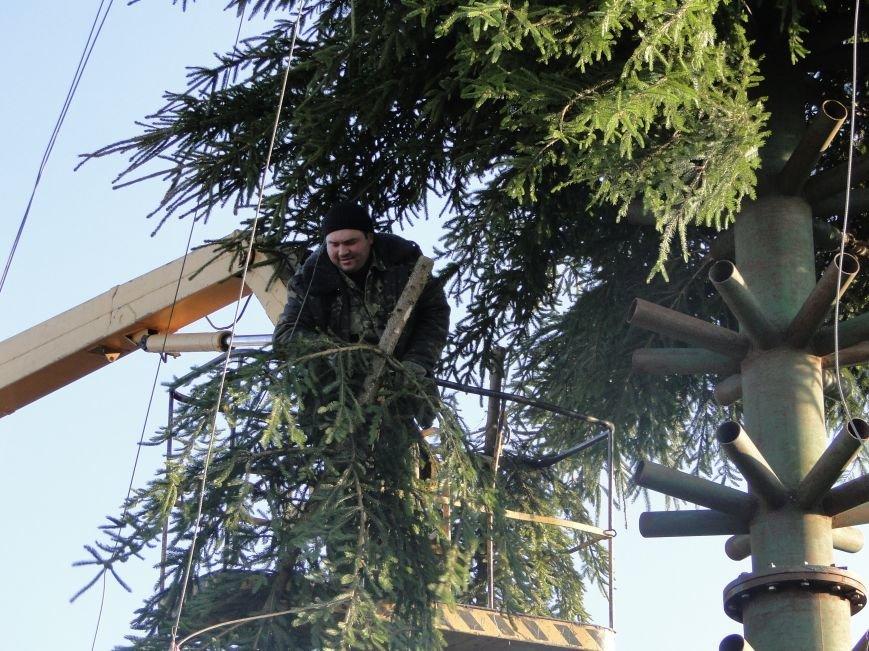 У Хмельницькому запахло ялинкою: на майдані Незалежності активно встановлюють новорічну красуню (Фото) (фото) - фото 1