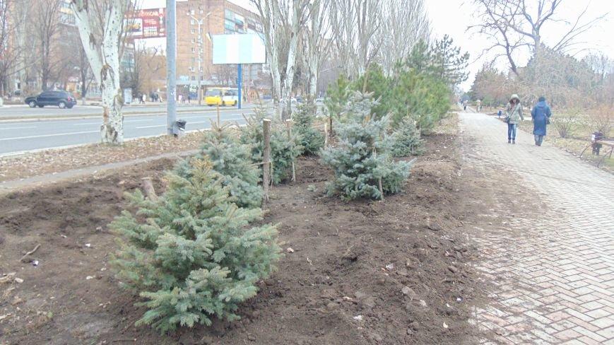 Сквер у площади Свободы украсили 20 лесных вечнозеленых красавиц (ФОТОФАКТ) (фото) - фото 1