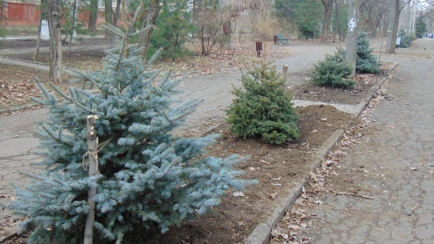 Мариуполь к Новому году украсили новыми елями (ФОТОФАКТ) (фото) - фото 1
