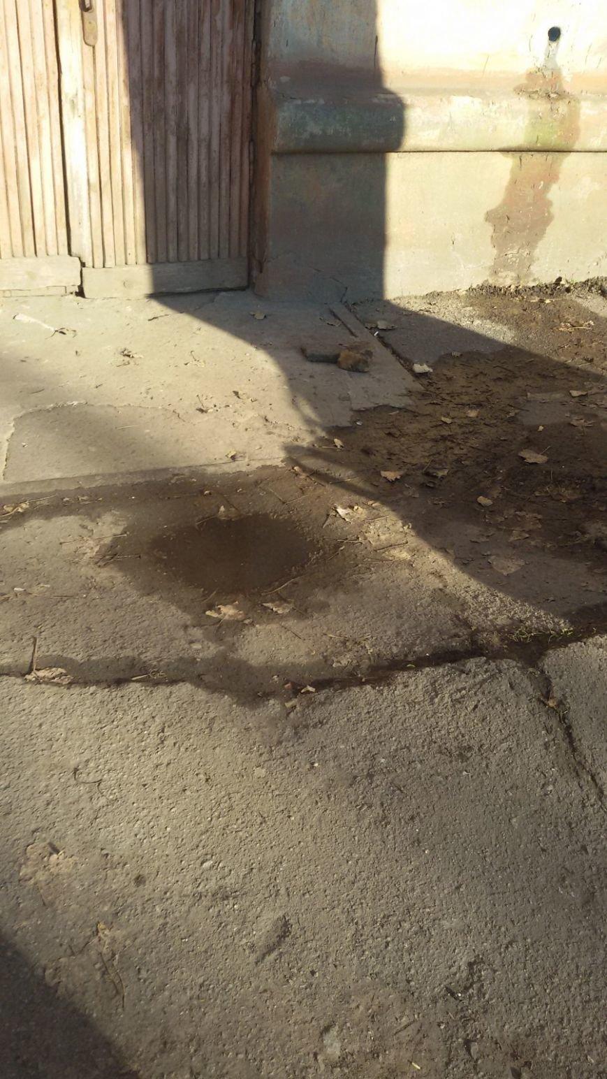 В Кривом Роге целый двор тонет в нечистотах (ФОТО, ВИДЕО), фото-1