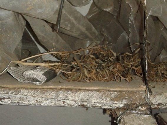 Близько 2 кг марихуани поліцейські вилучили у жителя області (ФОТО) (фото) - фото 1