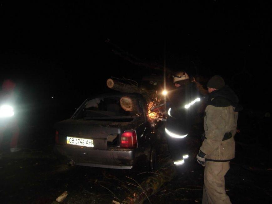 В Киевской области дерево рухнуло на автомобиль с людьми (ФОТО) (фото) - фото 2