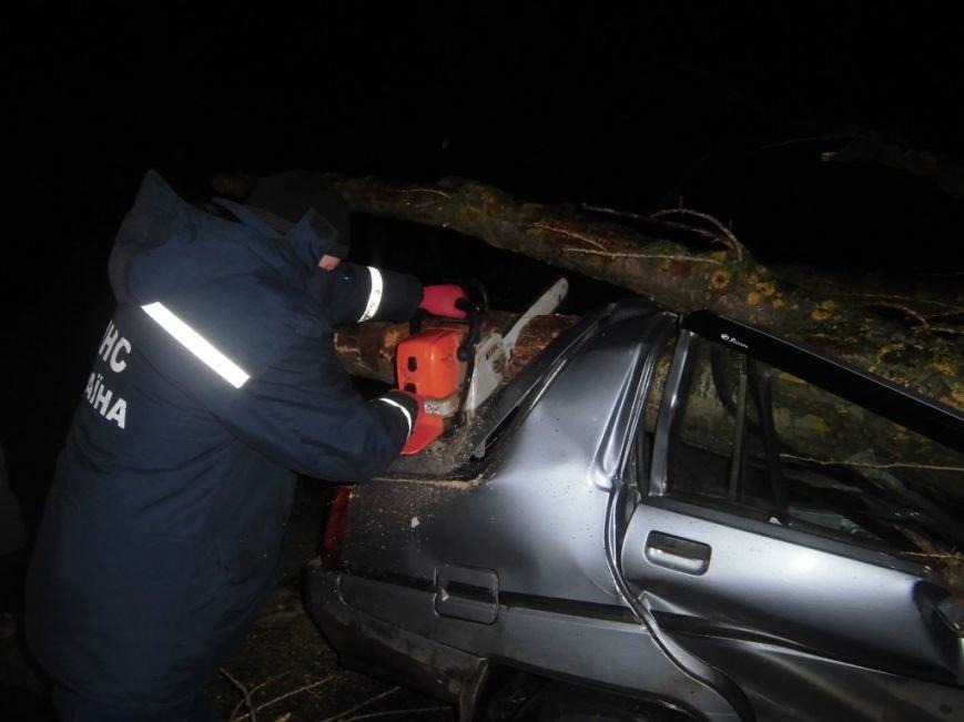 В Киевской области дерево рухнуло на автомобиль с людьми (ФОТО) (фото) - фото 1