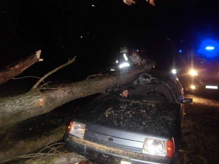 В Киевской области дерево рухнуло на автомобиль с людьми (ФОТО) (фото) - фото 3