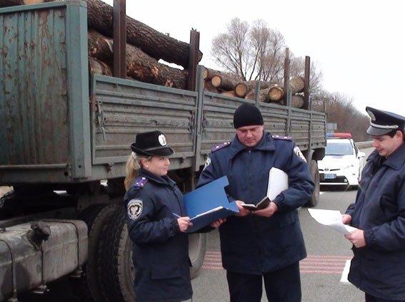 В Черниговской области процветает незаконный бизнес на дереве (фото) - фото 1