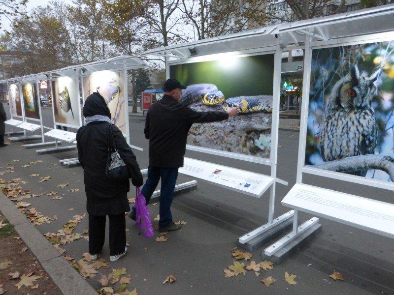 «Лесные истории» простоят в Николаеве еще неделю (ФОТО) (фото) - фото 3