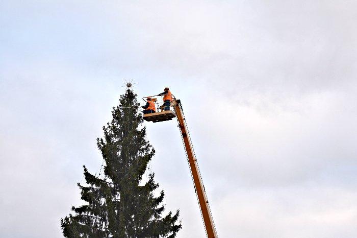 В Новополоцке украшают городскую елку, фото-1
