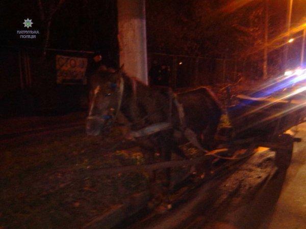 Курйоз дня: на Львівщині кінь завіз п'яного фірмана аж за 29 км від дому (ФОТО) (фото) - фото 1