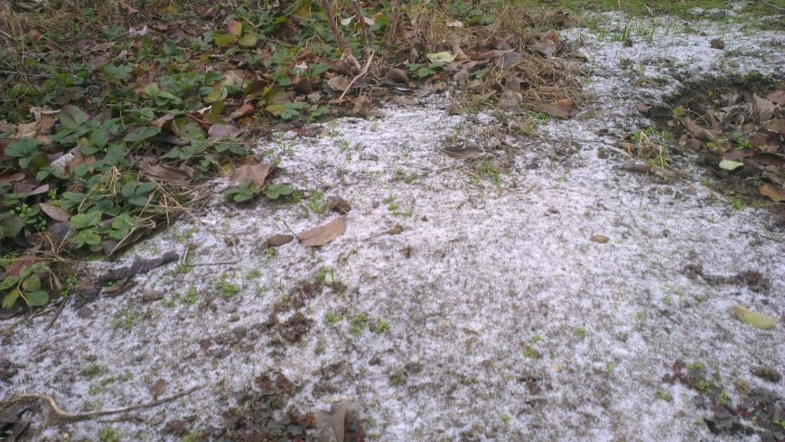 1ea15f65a4d4ef26a272563a3fa71604 На юге Одесской области метет снег