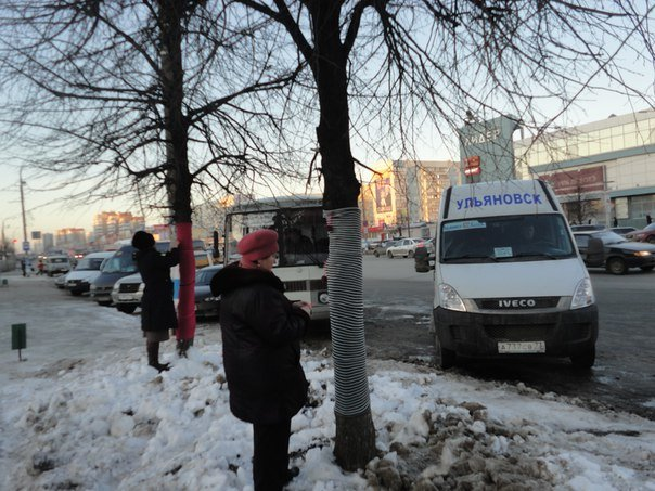 Ульяновские ярнбомберы утепляют деревья шарфами и гетрами, фото-1