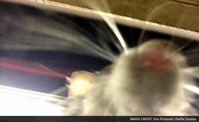 Пацюк зробив селфі (ФОТО, ВІДЕО) (фото) - фото 1
