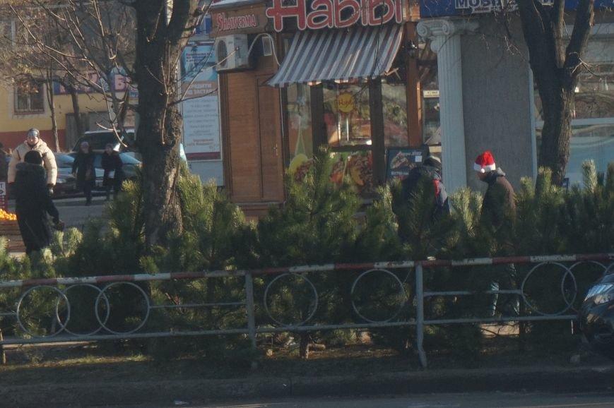 Во сколько криворожанам обойдутся Сосны кримские из Житомирского лесохозяйства (ФОТО) (фото) - фото 1