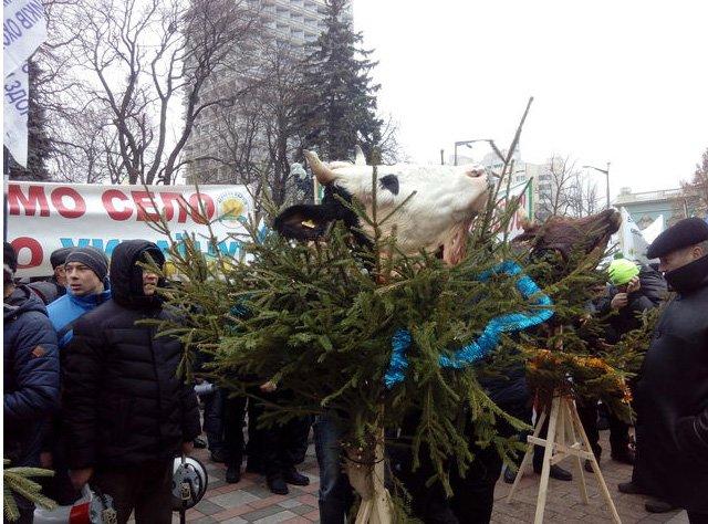 Митингующие аграрии принесли под ВР головы коров (ФОТО) (фото) - фото 2