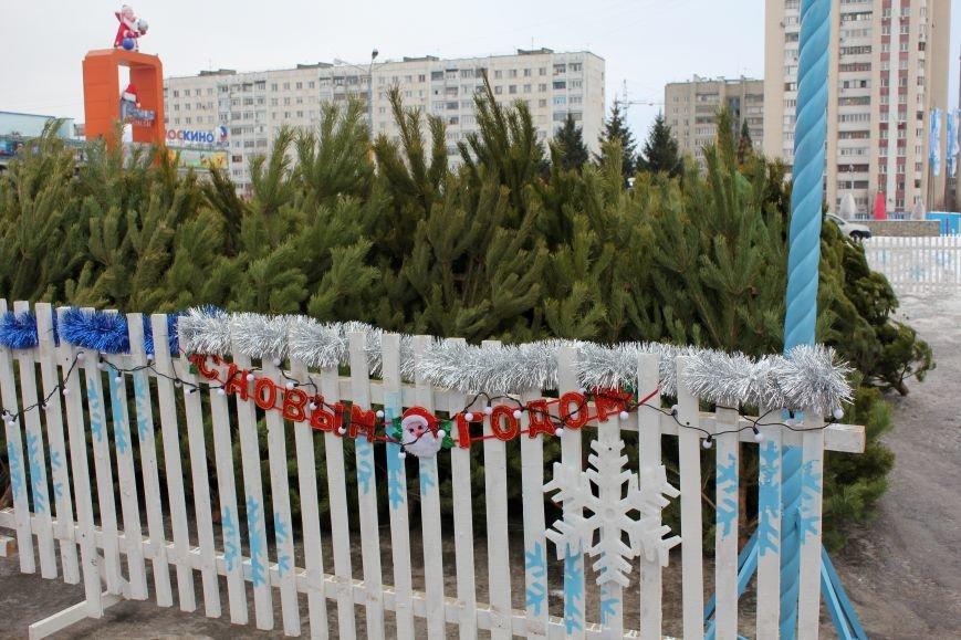 В Белгороде открылись первые ёлочные базары, фото-5