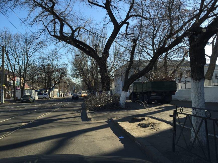 Николаевские коммунальщики разбросали по улицам спиленные ветки деревьев (ФОТОФАКТ) (фото) - фото 1