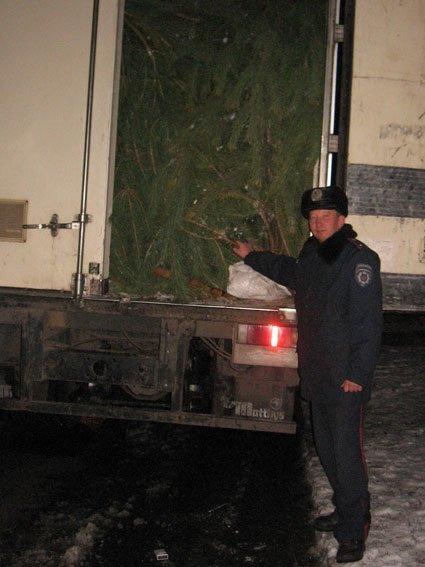 1000 уничтоженных к Новому году сосен обнаружили в Черниговской области за день (фото) - фото 1