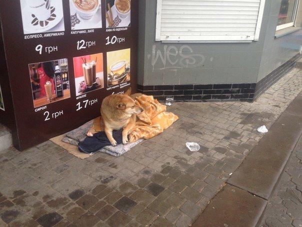 У Тернополі добрі люди облаштували собаці «хостел» під відкритим небом (фото) (фото) - фото 1
