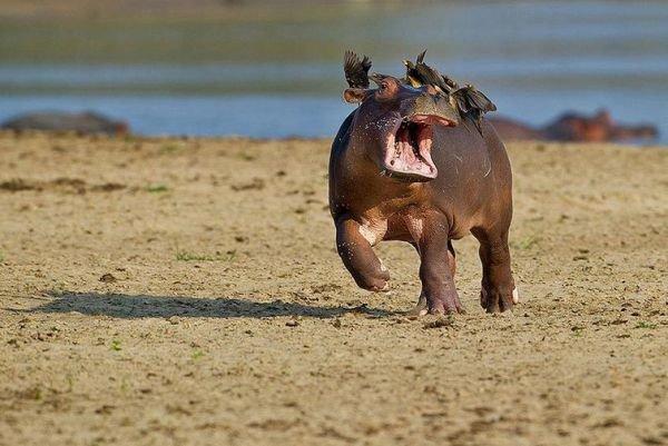 ТОП-10 самых забавных животных 2015 (фото) - фото 1