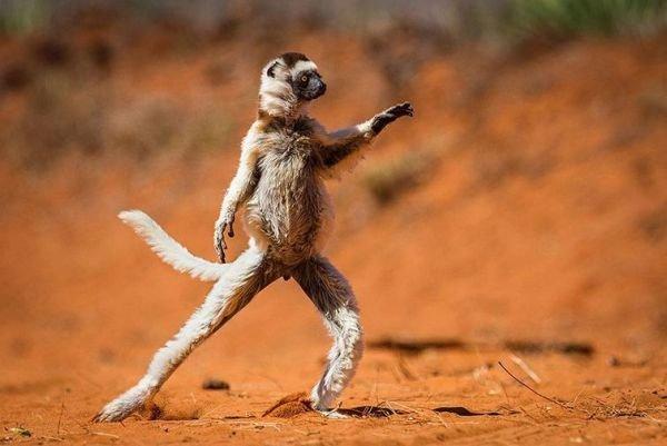 ТОП-10 самых забавных животных 2015, фото-2