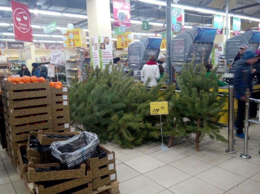 В Мариупольских супермаркетах продают живые ели (ФОТОФАКТ), фото-1
