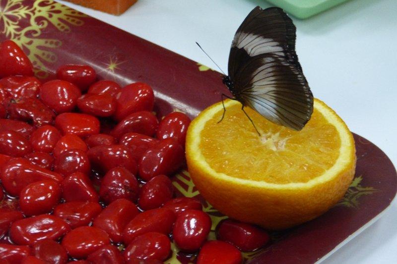Посреди снежного Сыктывкара порхают бабочки (фото) - фото 1